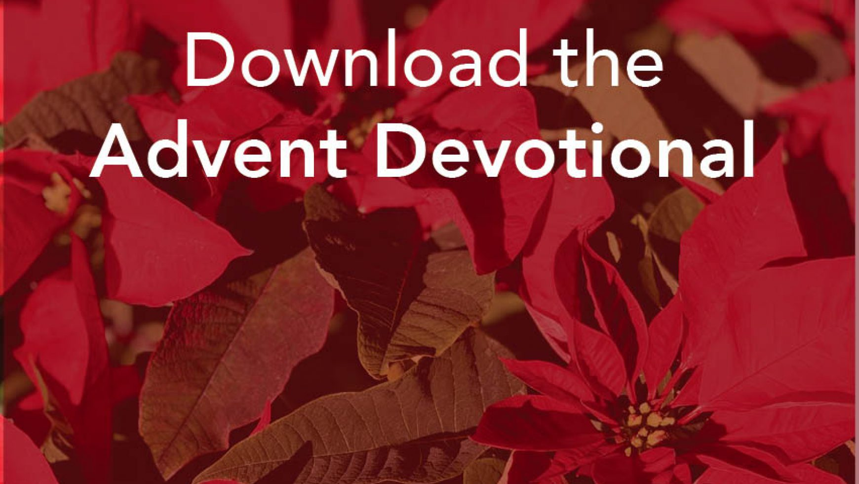Prepare the Way: Advent Devotions from the People of Mountain View UMC
